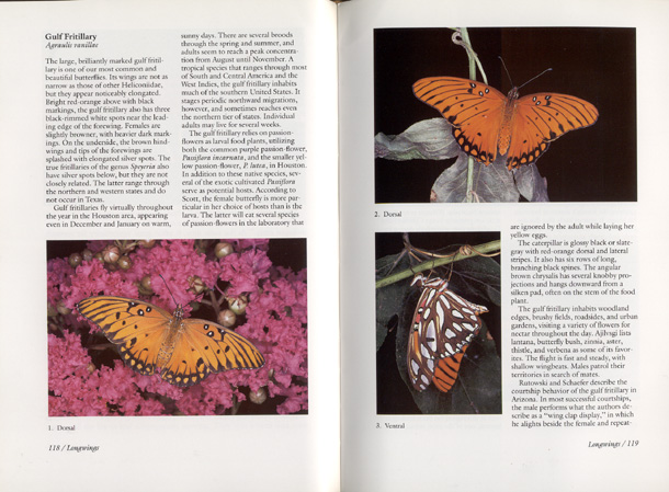 butterflies of houston and southeast texas by john and gloria tveten  content from butterflies of houston and southeast texas