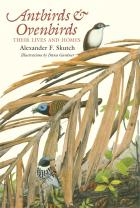 Cover of Antbirds and Ovenbirds